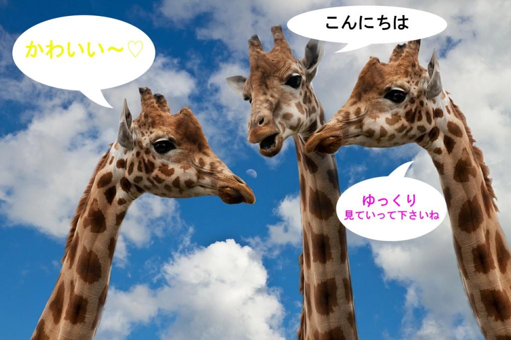 giraffes-627031_12801